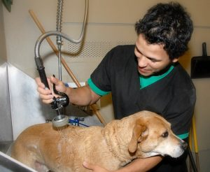 A team member giving a bath to a medium sized yellow dog
